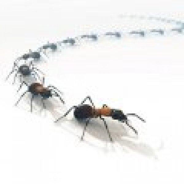 Consigli su come eliminare naturalmente le formiche in casa - Formiche in casa ...