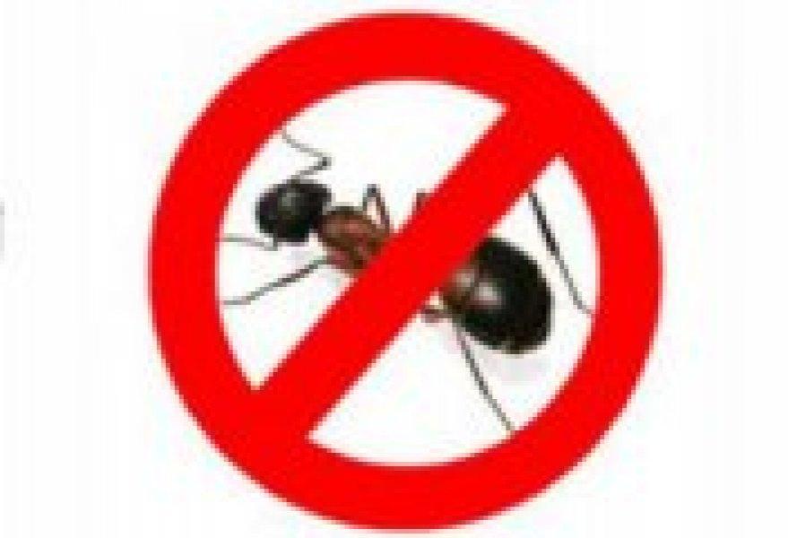 Rimedi contro formiche for Rimedi contro le talpe
