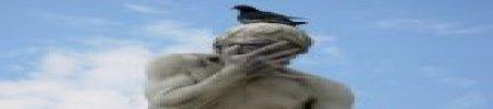 Dissuasori per piccioni, una vasta gamma di soluzioni per difendersi dagli uccelli infestanti
