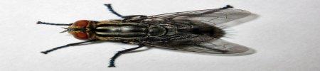 Come eliminare le mosche e combatterne le invasioni in casa