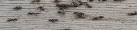 Formiche in casa, come eliminare questo problema