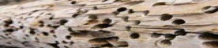 Tarme del legno: rimedi tradizionali