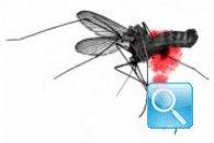 Combattere le zanzare: rimedi naturali per un'estate serena