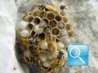 Disinfestazione delle api: tutto ciò che si deve sapere per allontanarle