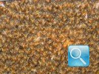 Disinfestazioni api: allontanamento con metodi naturali