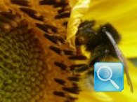 Nido di api: rimedi e rispetto dell'ambiente