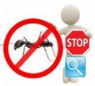 Come debellare le formiche, guerriglia casalinga