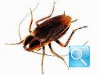 Come eliminare gli scarafaggi: rimedi semplici ed economici