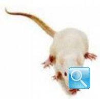 Trappole per topi: metodi di cattura