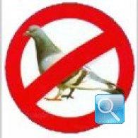 Dissuasori per piccioni: alcuni modelli proposti dalle aziende