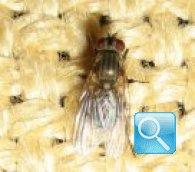 Effettuare una disinfestazione delle mosche di successo