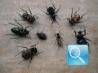 Controllo e disinfestazione degli scarafaggi