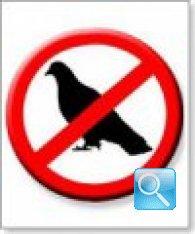 Dissuasori per uccelli. Trucchi e consigli per allontanare i piccioni