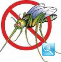 Rimedi contro le zanzare, naturali ed efficaci